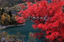 【红叶】<松坪沟红叶、特色羌寨双汽2日游>