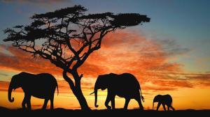 【万象全景】<斯里兰卡8天6晚奢享之旅>
