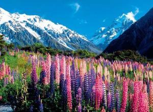【春节·新西兰】<纯净新西兰南北岛10日游>