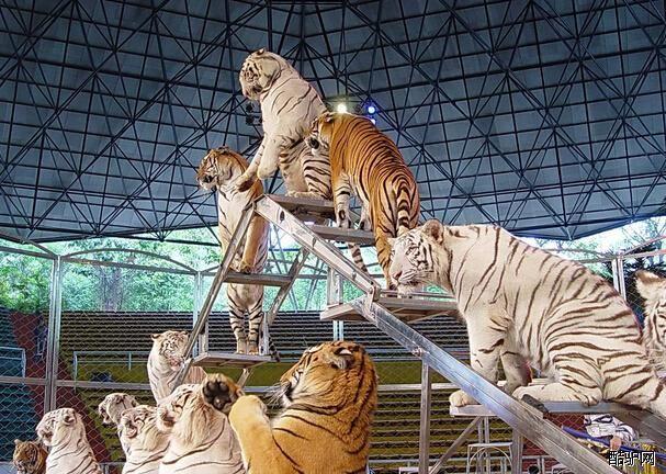 北京野生动物园展馆介绍